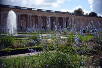 Flowers at the Grand Trianon.